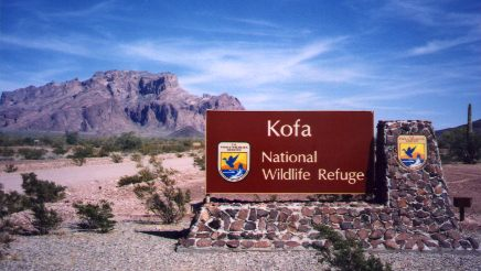 [Kofa Wildlife Refuge]